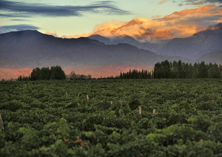 Top Wine Regions in South America