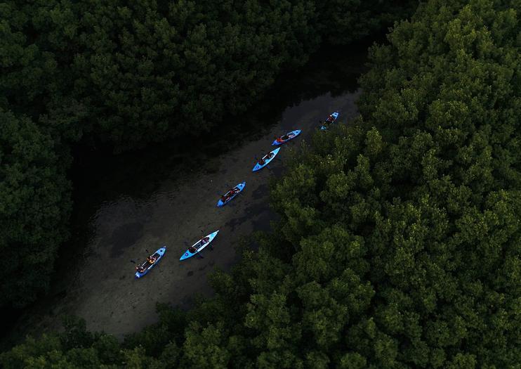 Bioluminescent Bay Kayaking Tours in Puerto Rico