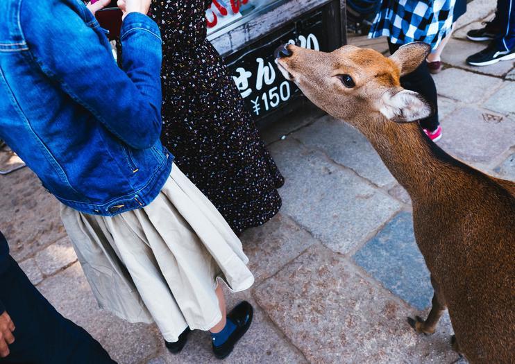 Nara Tours from Osaka