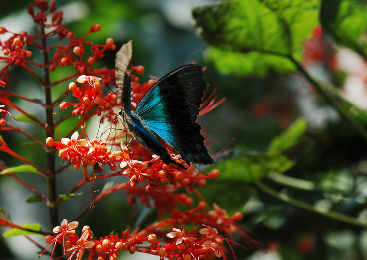 Kemenuh Butterfly Park