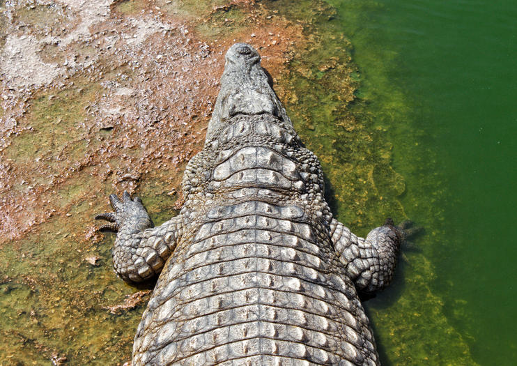 Crocoparc