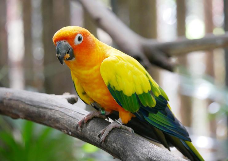Phuket Bird Park