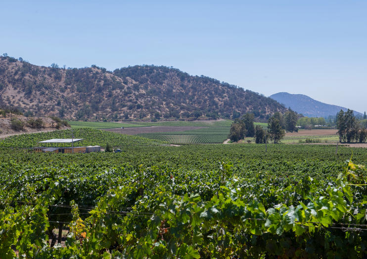 Top Wineries Near Santiago
