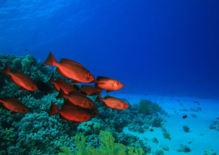 Things to Know Before You Go: Scuba Diving in Sharm el Sheikh