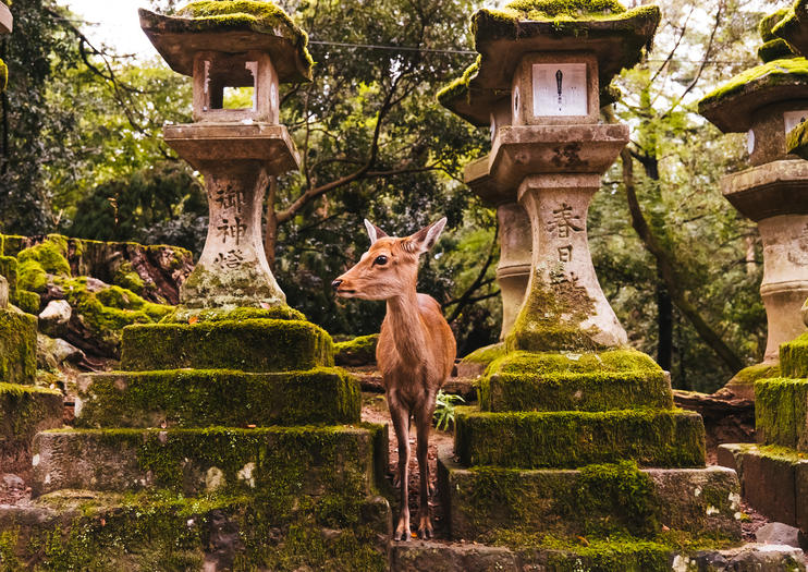 Things to Do in Kyoto This Summer