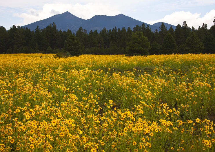 How to Spend 1 Day in Flagstaff