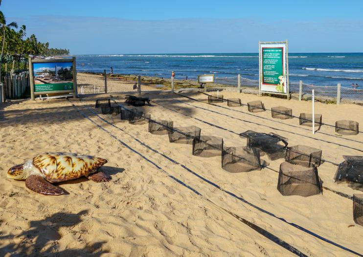 Tamar Sea Turtle Conservation Project (Projeto Tamar Florianopolis)