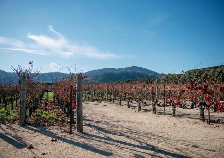 Reistips voor 3 dagen Napa en Sonoma