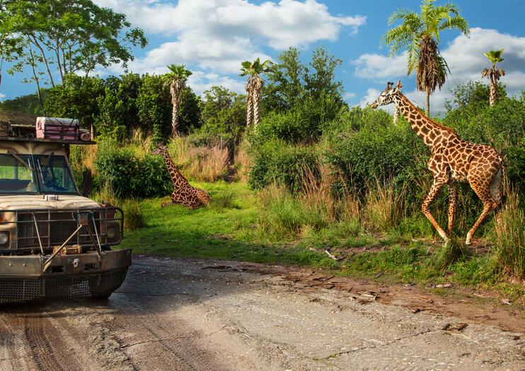 Disney's Animal Kingdom®