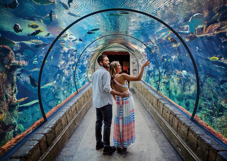 The Best Shark Reef Aquarium at Mandalay Bay Tours ...