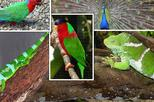 Kula Eco Park and Local School Full-Day Tour in Fiji