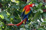 Jaco to Carara National Park Tour with Admission and Lunch
