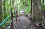 La Fortuna Waterfall and Hanging Bridges Nature Hike and Lunch