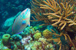 Bonaire Shore Excursion: National Marine Park Sail and Snorkel