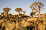 14-Day Namibia Highlights from Windhoek