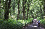 2 day biking and hiking tour in the coffee region from pereira in pereira 287578
