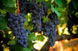 Excursão pela região vinícola de Napa e Sonoma