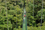 Sky Walk, Sky Tram, and Sky Trek Zipline Combo Tour from Monteverde