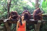 Café da manhã no zoológico de Cingapura com orangotangos