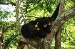 Howler Monkey Sanctuary Tour from Belize City