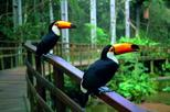 Parque das aves admission ticket in foz do iguassu in foz do igua u 386217