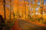 Excursão turística pelas folhagens de outono de Boston