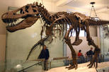 American Museum of Natural History Tour with Private Guide