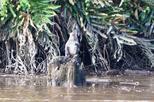 Klias river nature and wildlife cruise from kota kinabalu including in kota kinabalu 395072