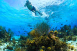 Private Stingray City and Snorkeling Half Day Charter