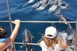 Dolphin Watching by Catamaran from Lagos