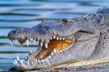 Aventura em aerobarco por Everglades em Miami com transporte