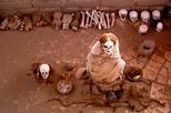 Half day chauchilla cementery tour from nazca in nazca 365897