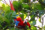 Puntarenas, Carara National Park Private Hike Shore Excursion