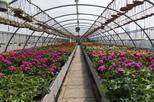 Santa Elena Day Trip: Silleteros and Flower Farm Cultural Tour