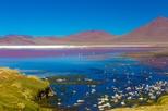 Excursão às Lagoas do Salar de Atacama, incluindo Ojos del Salar saindo de San Pedro de Atacama