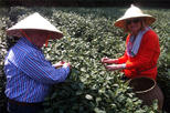 Private Tour: Hangzhou Tea Culture Day Tour