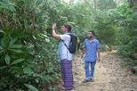 Private tour sreemangal day tour of lowacherra national park in sylhet 327423