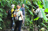 Day Trip to Monteverde Cloud Forest