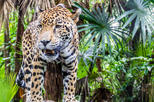 Belize Zoo and the Museum of Belize Tour