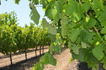 Margaret river wine and sights discovery tour from busselton or in busselton 275172