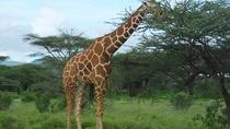 Deluxe Kenya flying safari, Nairobi, Cultural Tours