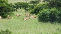 Special offer package 1 Night Lake Nakuru 2 Nights Mara, Nairobi, Cultural Tours