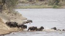 3-Day Masai Mara Safari in a Luxury Tented Camp, Nairobi, 3-Day Tours