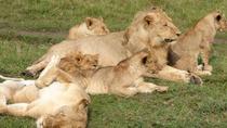 Africa Safari for Group of 4 in Kenya - Budget Masai Mara National Reserve in 3 days, Nairobi,...