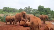 Elephants Orphanage Tour From Nairobi with Optional Giraffe Centre, Nairobi, Nature & Wildlife