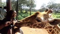 Giraffe Center and Elephant Orphanage Tour from Nairobi, Nairobi, Day Trips