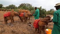 Giraffe Center and Elephant Orphanage Tour from Nairobi