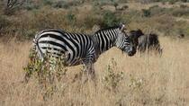 Kenya Safari Package to Amboseli National Park for 2 days, Nairobi, Multi-day Tours