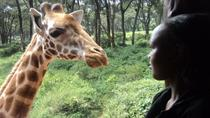 Tour to Giraffe Center from Nairobi, Nairobi