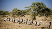 3-Day Selous Game Reserve the Jungle of Africa, Dar es Salaam, Private Sightseeing Tours